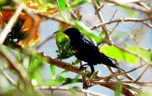 Sunbird Seeking Nector