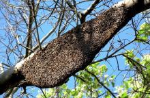 15 Honey Hive