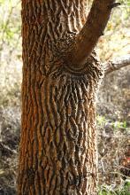Crocodile Look Trunk Drum Stick Tree