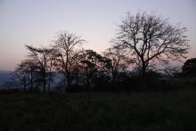 17 Morning Jungles