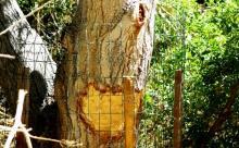 Beaver Gaurd