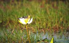 WagTail on Lilly