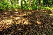 6 Leaf Litter